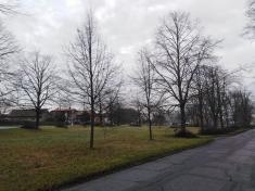 Revitalizace veřejné zeleně v obci