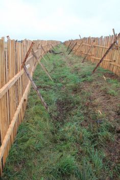 Obnova krajinných struktur obce Nepolisy