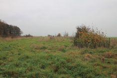 Podzimní výsadba alejových listnatých dřevin vBiocentru.