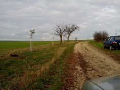Sázení ovocných dřevin vhonitbě k.ú. Zadražany r. 2015