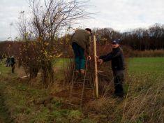 Sázení ovocných dřevin v honitbě
