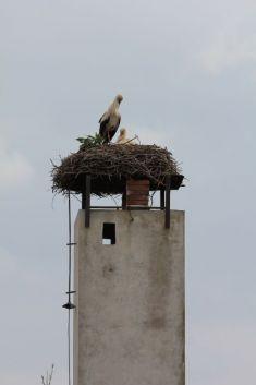 Čápi a další ptactvo
